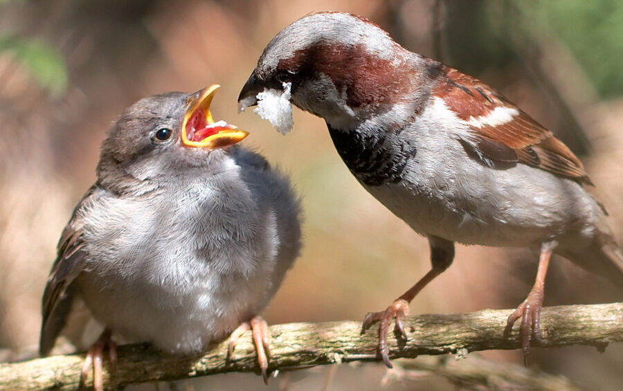 Uccelli, Cibo, Imboccare, Simbolo, Fame, Dono, Natura, Amore, Aiuto, Mangiare.